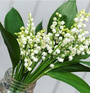 Lily of the Valley - Floral Expressions